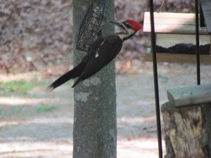 woodpecker2014
